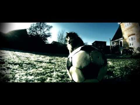Gopro HD Hero Dog Alaskan Malamute Cinema Experience 2011