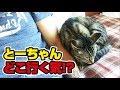 朝テレビを観てたら猫が横に座ってきた!〜Morning time with a cat!〜