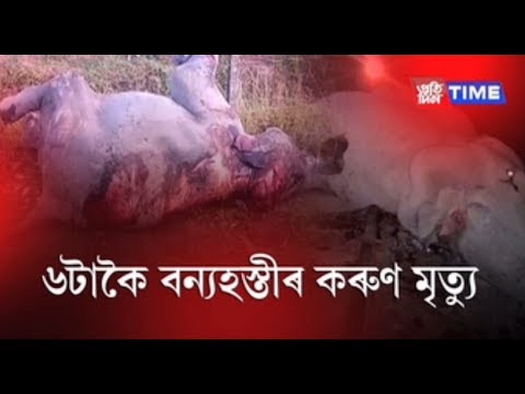 Man-elephant conflict kills six elephants within 24 hours in Assam