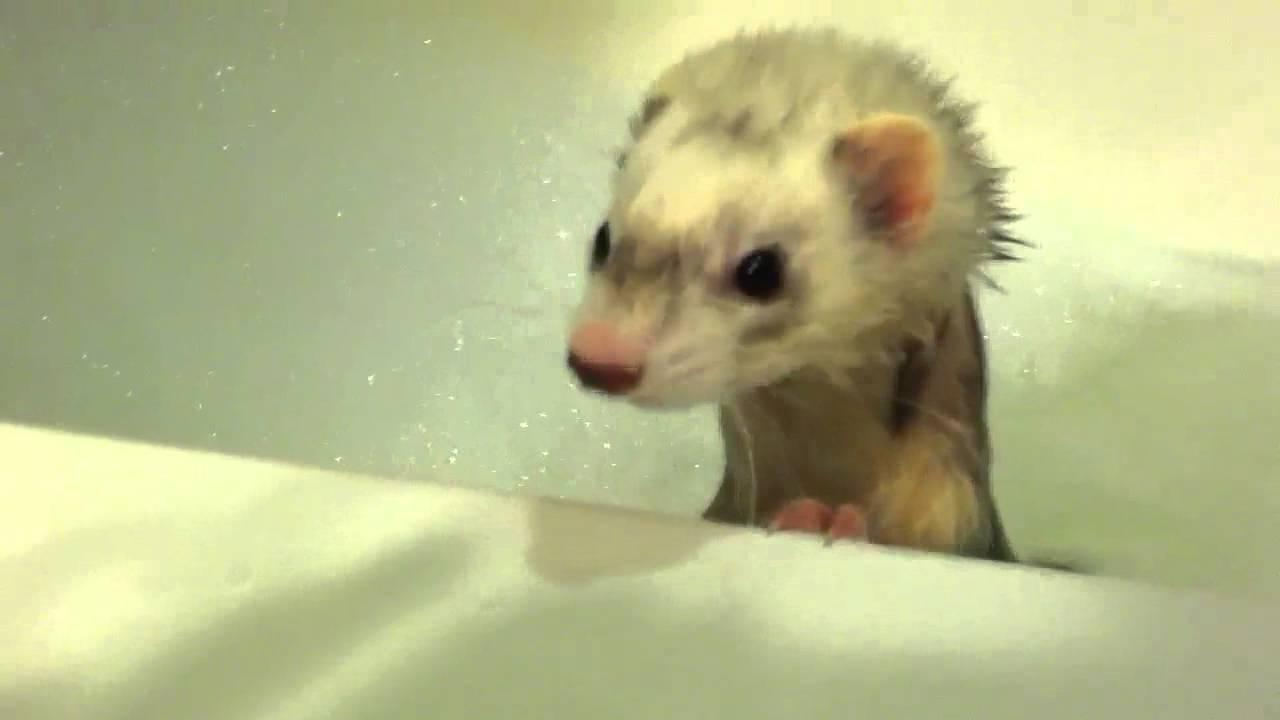 Baby funny bath