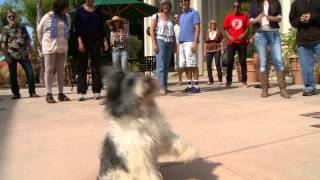 "Dog Flash Mob, ""everybody Talks"" By Neon Trees Parody"