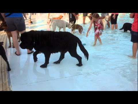 Terrace Park Dog Swim