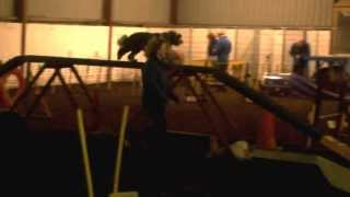 Agility Training With Hugo My Tibetan Terrier
