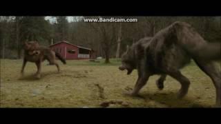 Twilight Wolves - Battlefield