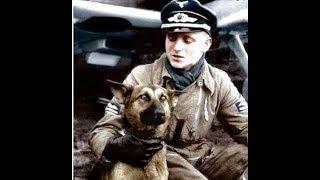 Порода Немецкие овчарки в Вермахте, Войсках Ваффен СС, Гестапо, Люфтваффе, Кригсмарине. Догтренинг.