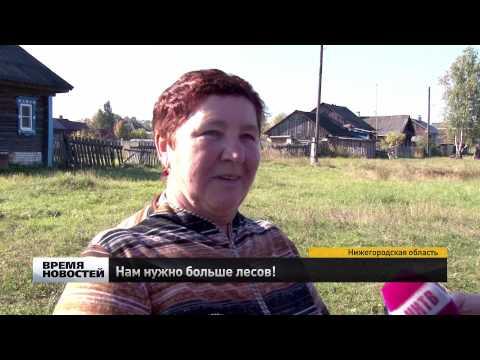 Журналистам показали, как выращивают сосновые леса