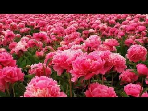 Ах, эти летние цветы!