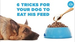 Why is MY DOG NOT EATING his food anymore? SOLUTION