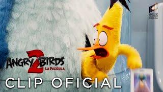 ANGRY BIRDS 2: LA PELÍCULA. Pájaros y cerdos en misión secreta. Ya en cines.