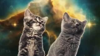 коты поют