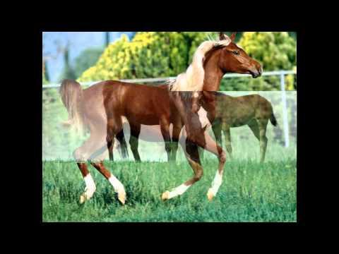 Một số hình ảnh về con ngựa