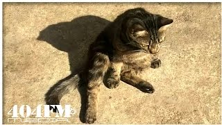 Funny cat is basking in the sun
