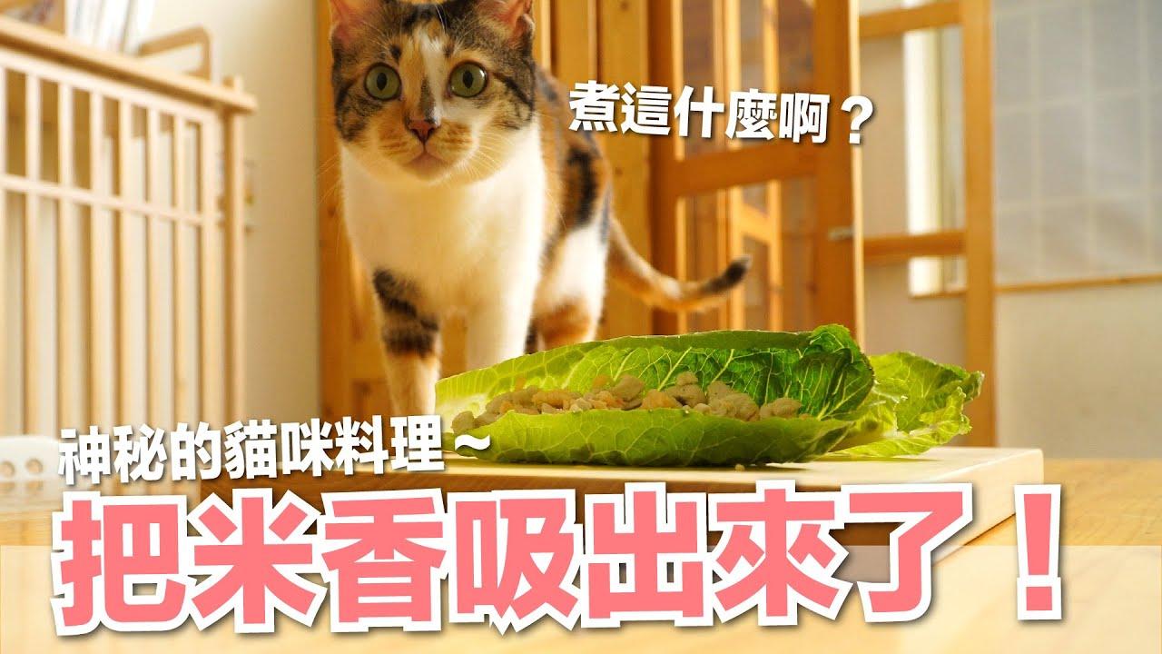 【好味小姐】為什麼桌上一盤菜?神秘貓料理把米香吸出來了!|貓主食|好味貓廚房EP193