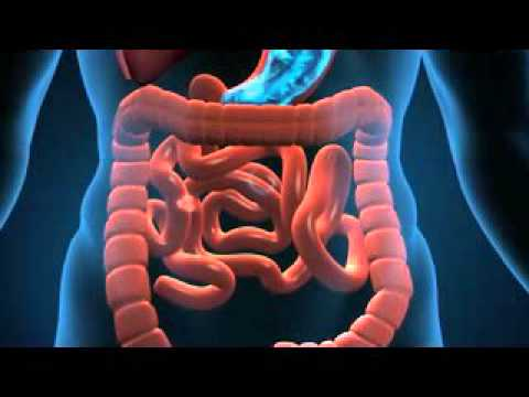Don\'t believe the Truth about Human digestive system animation video ...