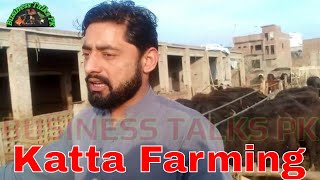 Katta Farming in Pakistan/Katta farming Business in Punjab/Calf farming in Pakistan/Calf farming