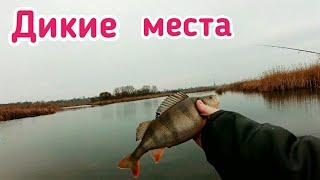 Рыбалка мечта на Дикой реке