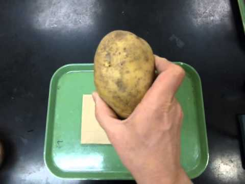 potato enzyme lab In this lab, you will study an enzyme that is found in the cells of many living tissues the name of the enzyme is catalase it speeds up a reaction which breaks down hydrogen peroxide, a toxic chemical, into 2 harmless substances--water and oxygen.