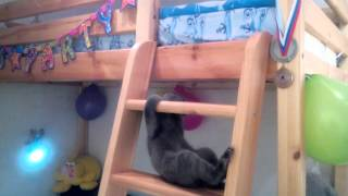 Смешной кот Марсик