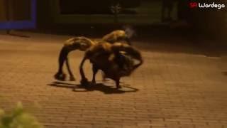 Мутант Собака-Паук Пранк