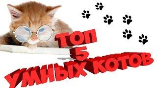 ТОП 5 самых умных пород кошек