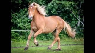 47. 2012 Estonian punch-gelding Napsu-boy 168cm