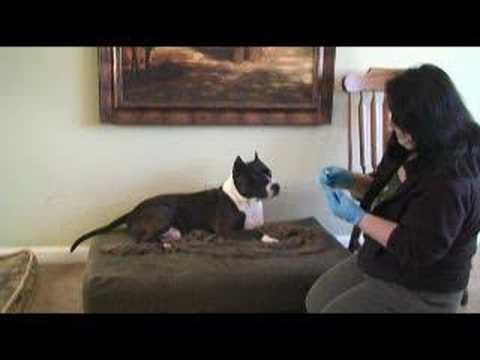 Canine DNA test results