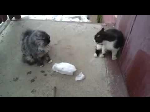 Не важно, сколько кошек дерется