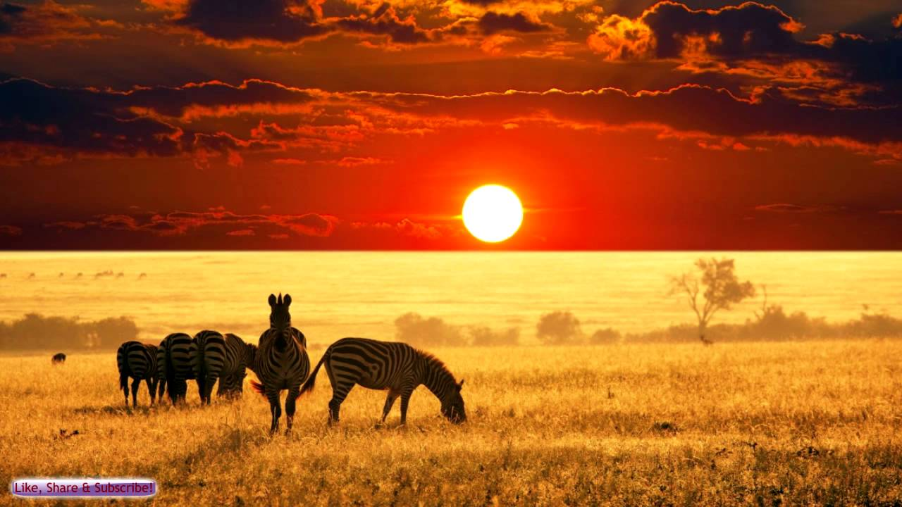 African Music | African Savannah | Relax, Study & Ambience - YouTube