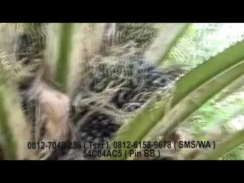 Manfaat Pupuk Organik Di Jakarta 8c2c9d5277