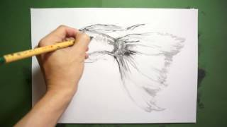 【HOW TO DRAW-描き方】「熱帯魚:グッピー( Guppy)」 を墨でデッサン。水墨画的即興イラスト。