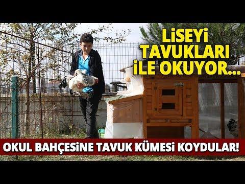 Tavuklarından Vazgeçemeyen Genç, Lisenin Bahçesine Kümes Kurdu