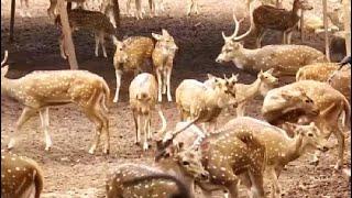 Bhubaneswar Zoo Reopens