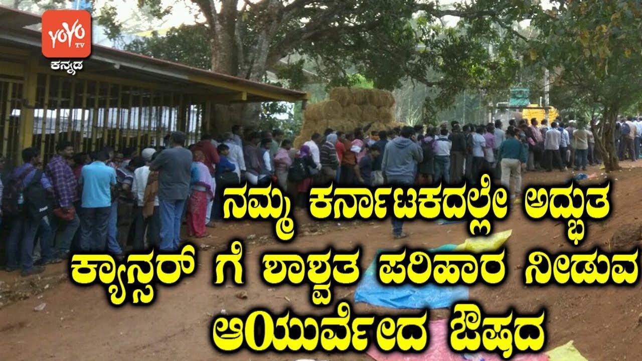 ನಮ್ಮ ಕರ್ನಾಟಕದಲ್ಲೇ ಅದ್ಭುತ ಕ್ಯಾನ್ಸರ್ ಗೆ ಶಾಶ್ವತ ಪರಿಹಾರ ನೀಡುವ ಆಯುರ್ವೇದ ಔಷದ ! | YOYO TV Kannada News #Herbalmedicine