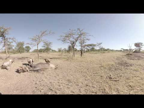360 VR 4K Video of Sanctuary Serengeti Migration Camp, Tanzania