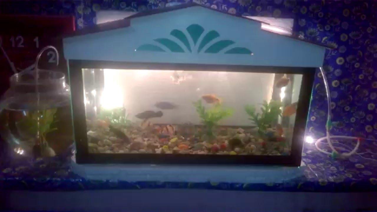 Fish for aquarium at home - Fish Aquarium Enus Home Hyderabad