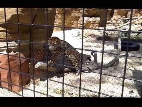 Lavanthi in Turtle Back Zoo