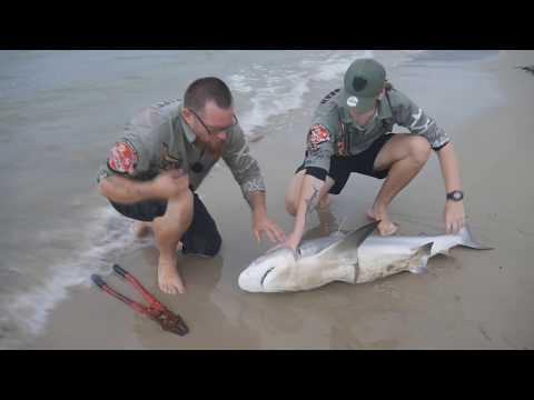 SHARK FISHING. Gold Coast