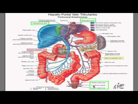 Portal Hypertension I- best HD video explanation ever!!!