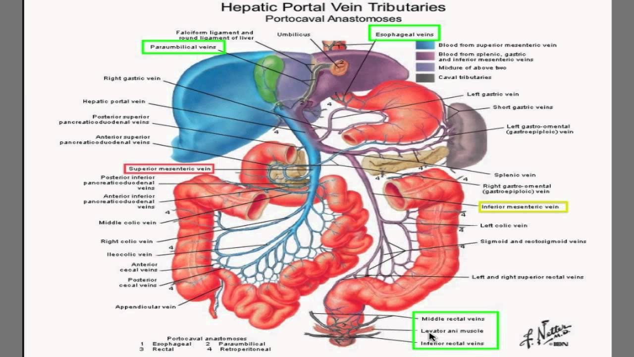 Portal Hypertension I Best Hd Video Explanation Ever Youtube
