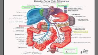 Portal Hypertension I- best HD video explanation ever!!!