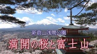 新倉山浅間公園 「満開の桜と富士山」Arakurayama Sengen Park: Cherry Blossoms and Mt. Fuji