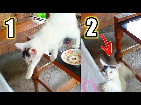 Lucu Tapi Kasihan Kucing Ngantuk Jatuh Dari Meja - Funny Cats Video # 19