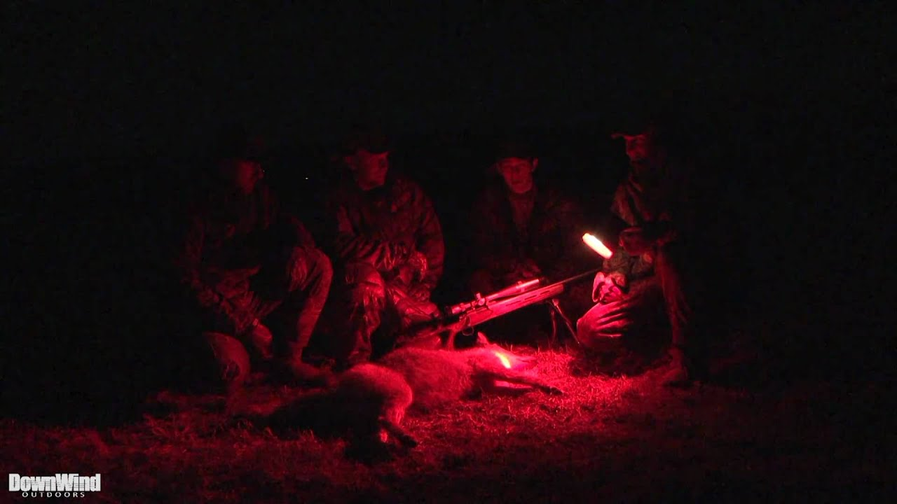 YouTube Hunting Coyotes at Night