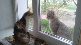 Кошка злится на кота - прикольное видео ;)