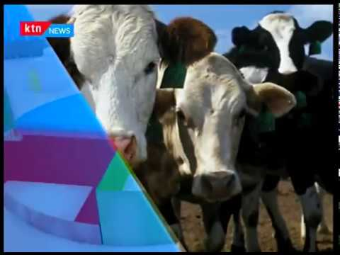 Next Frontier: Dairy farmers in Kenya will soon see the cost of feeding their animals go down