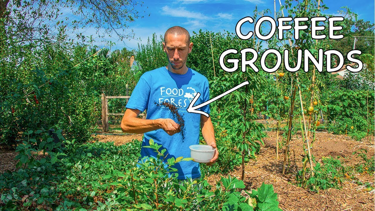 What Happens When You Use Coffee Grounds In The Garden?