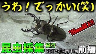 大型のミヤマクワガタを求めて泊まり込みで採集してきました。 昆虫採集...