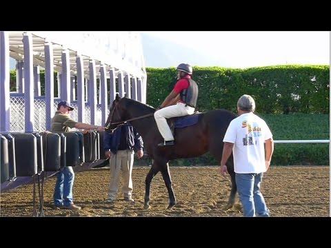 Racehorse Starting Gate School at Santa Anita