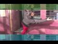 Ranveer Singh Spoofs Shahrukh Khan Kajol s Iconic DDLJ Train Scene Bollywood News