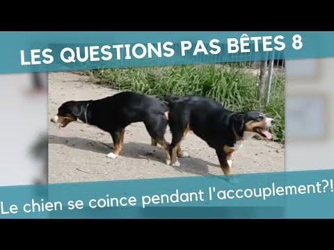 LQPB 8 : Le chien se coince pendant l'accouplement?!